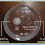 Cryopreservation (freezing) of embryos