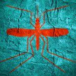 Zika virus egg donation